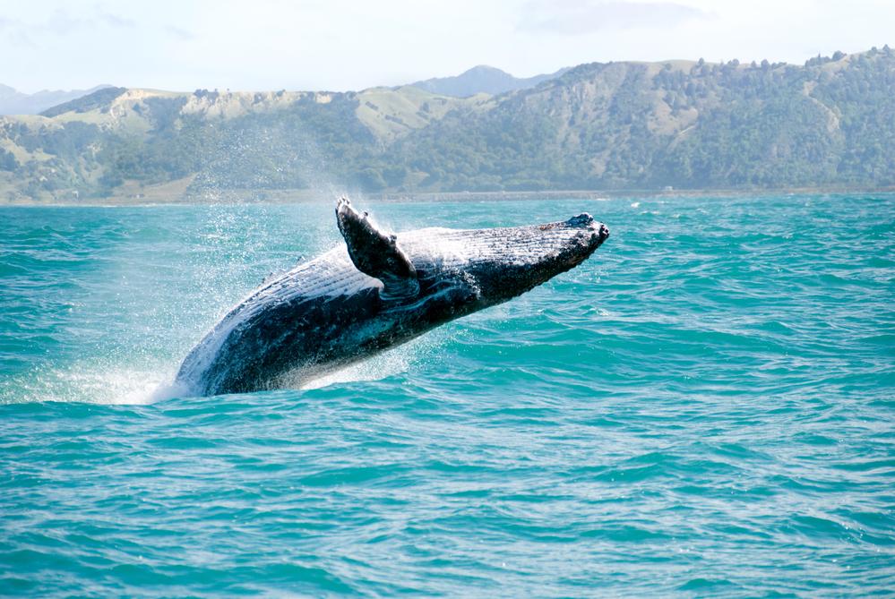 кадрирование, киты австралии фото популярный отечественный